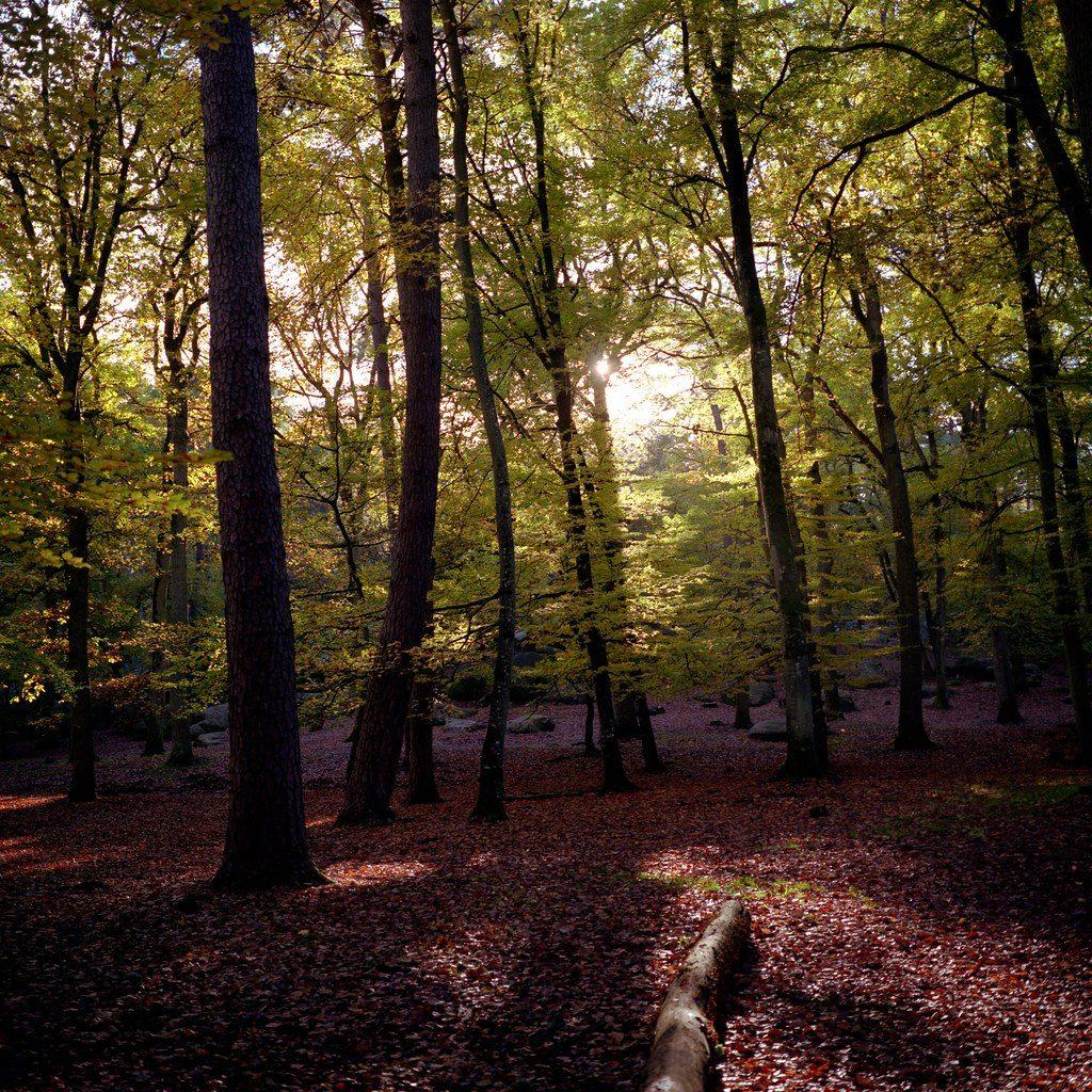 フォンテーヌブローの森の写真